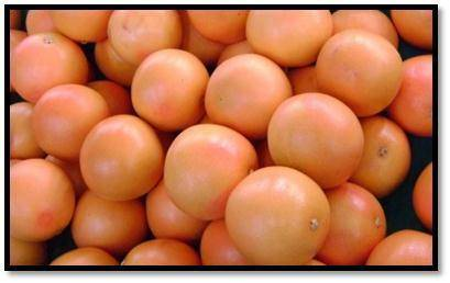 Product: GrapefruitAvailability:  Week 31 to 34